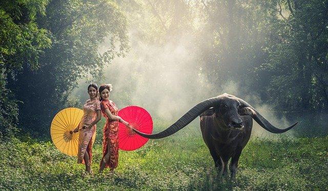 Chicas con buffalo. Novia vietnamita